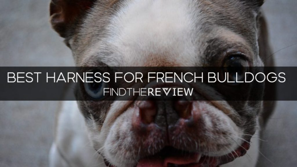 Best Harness for French Bulldogs
