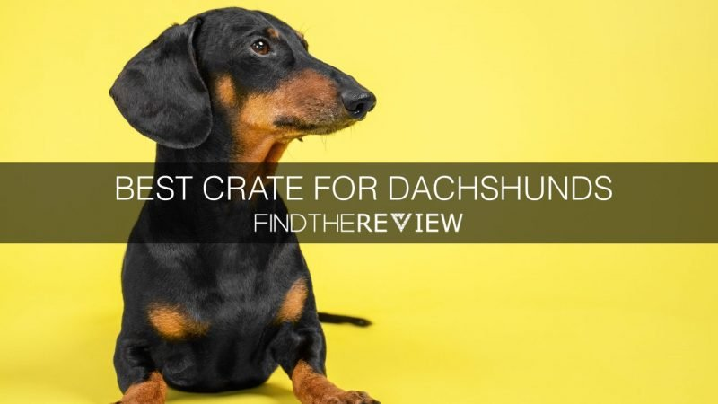 Best Crate For Dachshunds