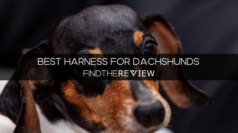 best harness for dachshunds