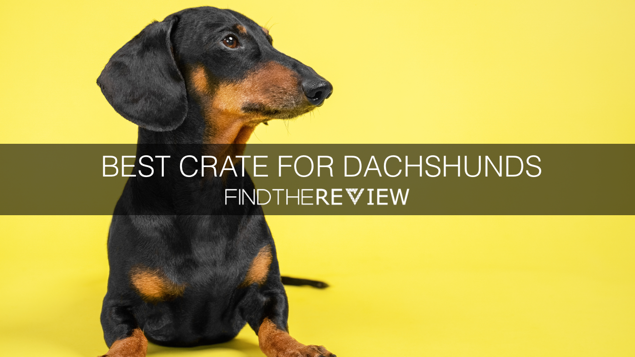 best crate for dachshund